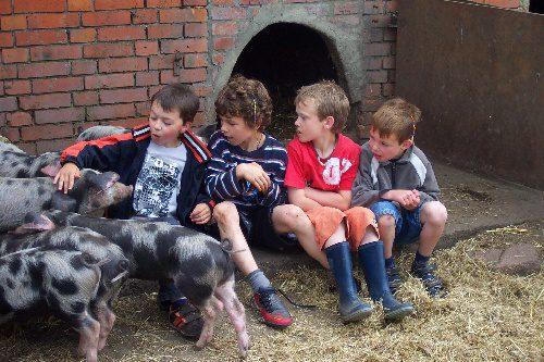 Wohnmobilstellplatz Animal Farm